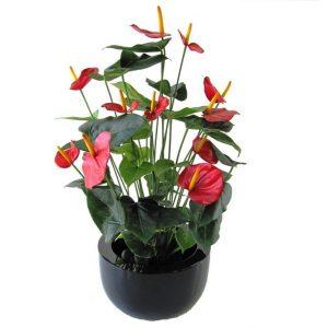 Anthurium Deluxe kunstplant 80 cm rood