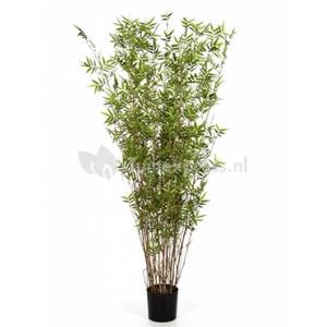 Kunstplant Bamboe oriental L