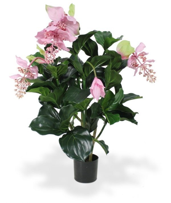 Medinella kunstplant deluxe 100 cm