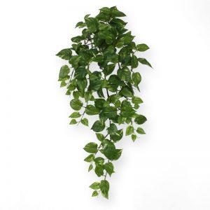Scindapsus hangplant 75 cm groen