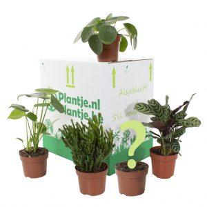 Groene Thuiswerk box (4 + 1 stuks)