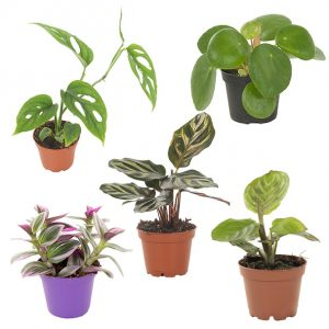 Mini Urban Jungle 5-pack (package deal)