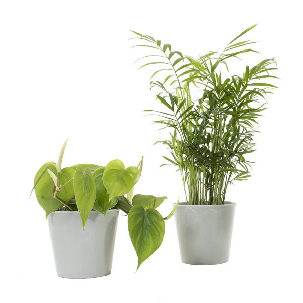 Groene Thuiswerk Duo (incl. lichtgrijze sierpotten)