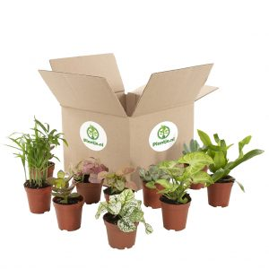 Groene Mini box (10 stuks)