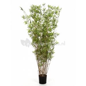 Kunstplant Bamboe oriental XL